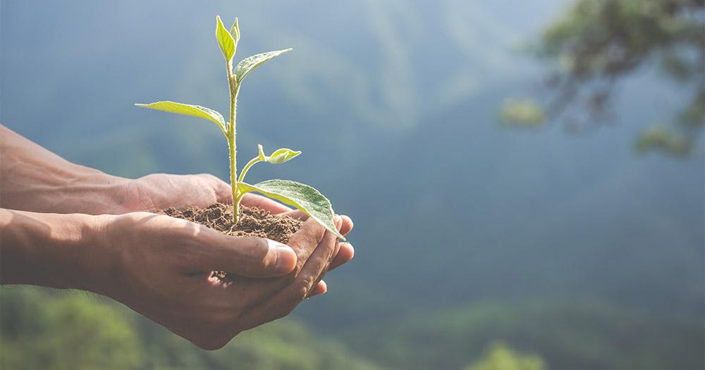 Chương trình đào tạo ngành Phân bón và Dinh dưỡng cây trồng
