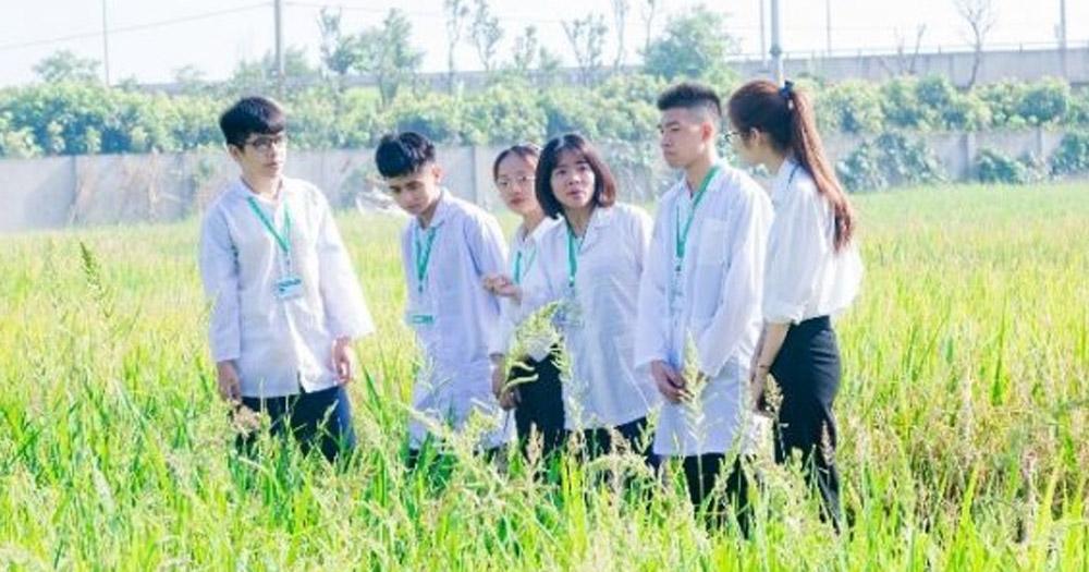 Nhu cầu nhân lực ngành Phân bón và Dinh dưỡng cây trồng