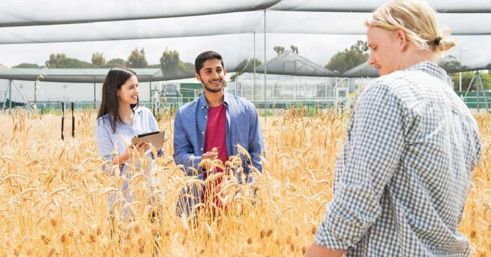 Các chuyên ngành Nông nghiệp phổ biến